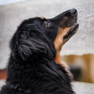 Hundegspür Impressum