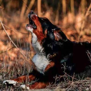 Hundegspür Datenschutz