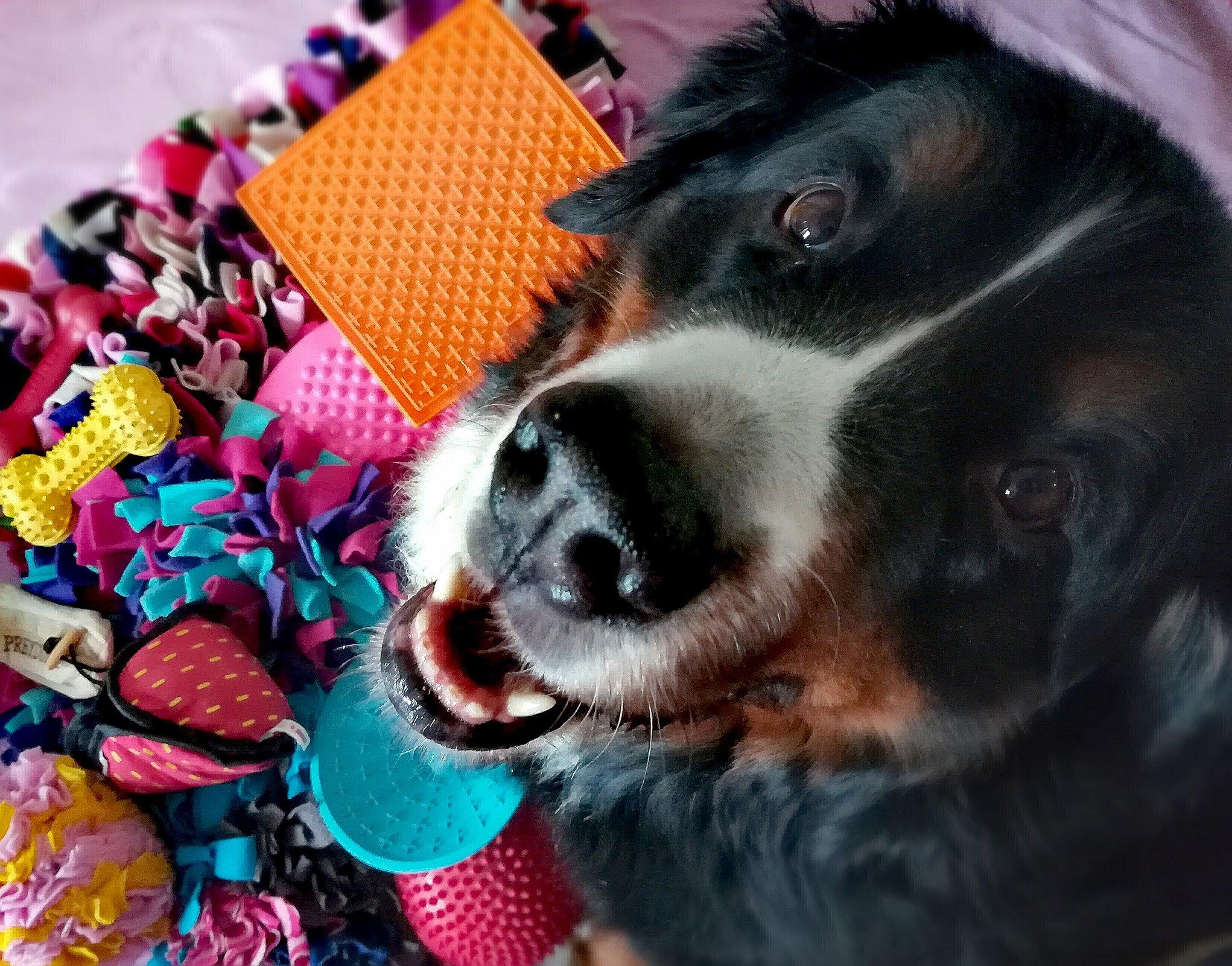 Penny von Hundegspür